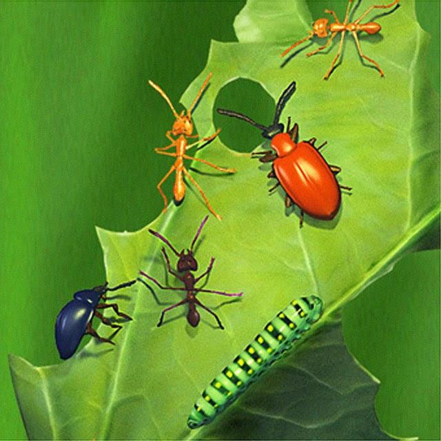 Curso online grátis de Entomologia básica