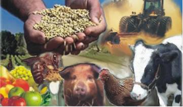Curso online grátis de Agropecuária