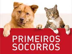 Curso online grátis de Noções Básicas Primeiros Socorros em Animais