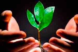 Curso online grátis de Introdução a Gestão do Meio Ambiente : Sustentabilidade e Educação Ambiental