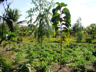 Curso online grátis de Sistemas Agroflorestais