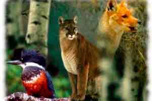 Curso online grátis de Básico de Zoologia