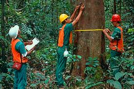 Curso online grátis de Manejo e Inventário Florestal