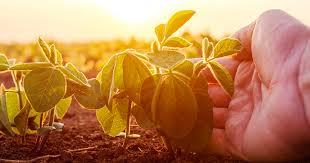 Curso online grátis de Introdução a Agronomia