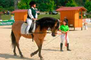 Curso online grátis de Volteio e Equitação