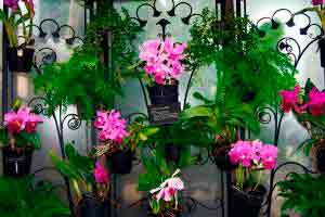 Curso online grátis de Cultivo de Orquídeas