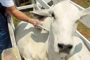 Curso online grátis de Defesa Sanitária para Animal de Grande Porte