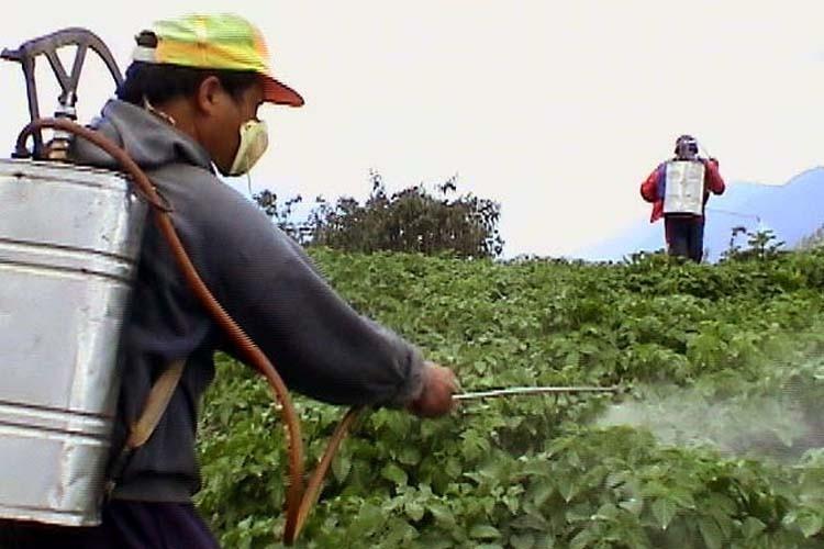 Curso online grátis de Controle de Pragas e Agrotóxicos