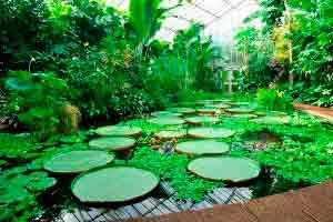 Curso online grátis de Botânica Geral