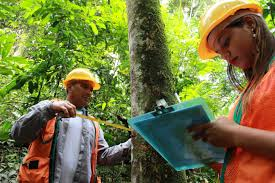 Curso online grátis de Manejo e produção florestal
