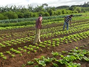 Curso online grátis de Jardinagem e Horticultura