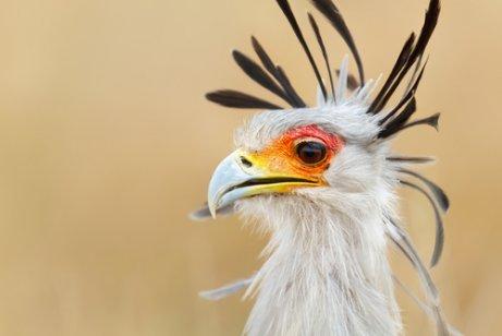 Curso online grátis de Aves de Rapina
