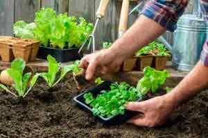 Curso online grátis de Introdução a Permacultura