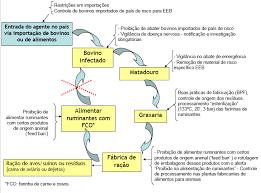 Curso online grátis de Materias Específicos de Risco - MER (bovino)