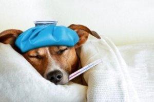 Curso online grátis de Introdução à Homeopatia Animal Veterinária