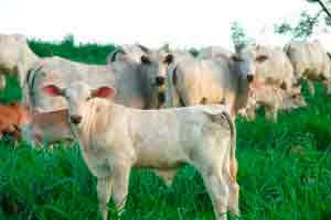 Curso online grátis de Introdução ao Manejo de Pastagem